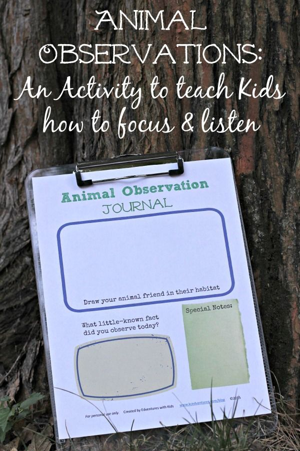 Help kids to increase their attention span with animal observation activities {+ free printable!} Fun & easy outdoor nature activity