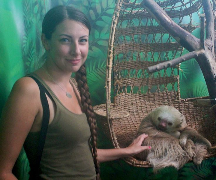 baby sloths for sale - Google Search