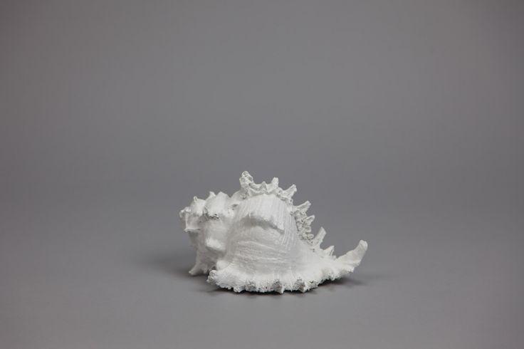 Búzio Branco 20 x 15 x 12 cm | A Loja do Gato Preto | #alojadogatopreto | #shoponline | referência 78264538