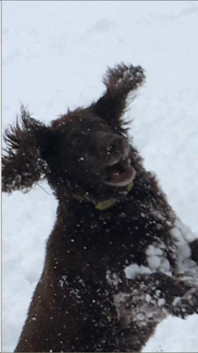 Flying Wachtelhund