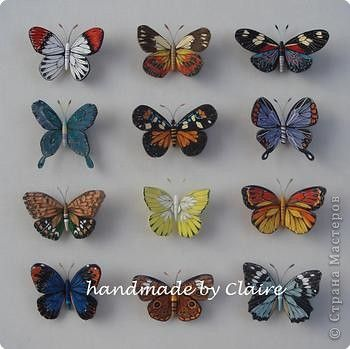 butterflies   - can't believe these are quilled
