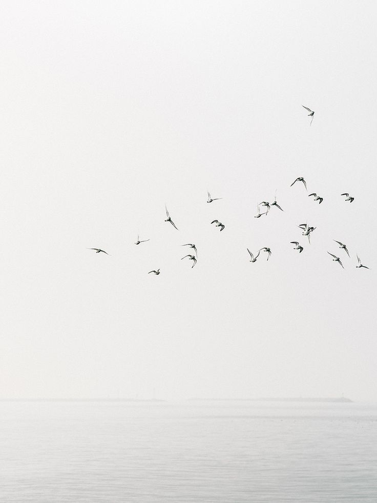 //Flock of birds, hovering above. Just a flock of birds, that's how you think of love