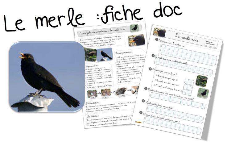Fiche doc: Le merle - Bout de gomme