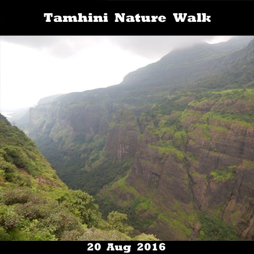 Tamhini Nature walk on 20 Aug 2016 Book now - http://bit.ly/2b8baQn