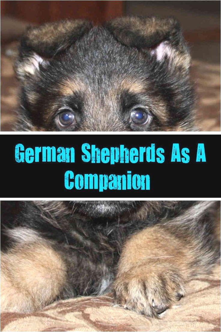 Pin By Richard F Skinner On German Shepherd German Shepherd