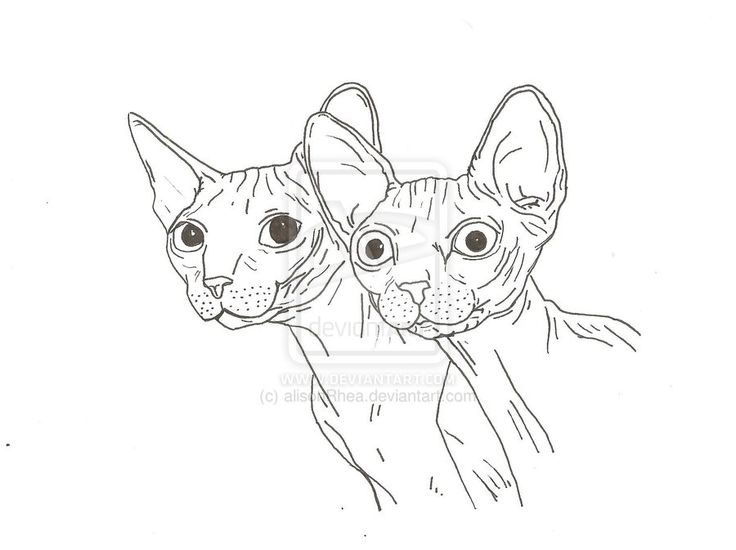 Imgs For Gt Sphynx Cat Drawing Line Drawings Pinterest