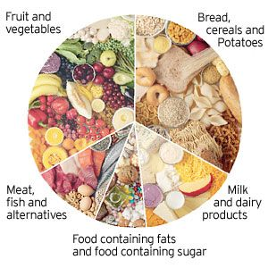 Eating foods in proper combination for the best digestion for Food wheel template