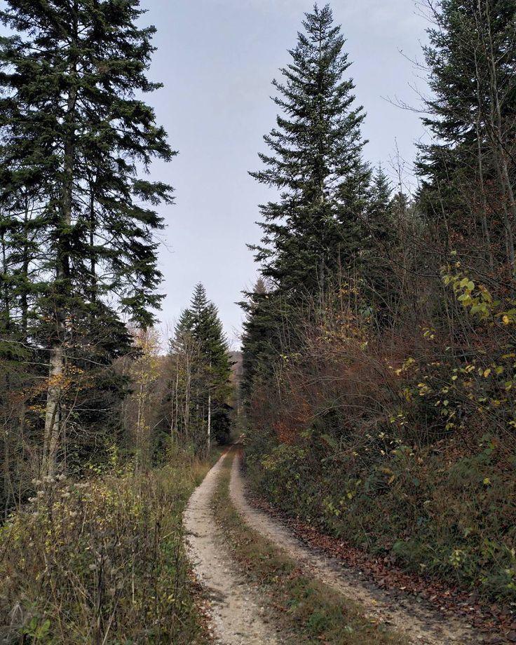 Was wohl hinter den nächsten Biegung wartet? Vermutlich eine weitere Biegung  #Naturmomente #Schwarzbubenland #Solothurn #Nunningen #Schweiz  #photooftheday #magicplaces #kraftorte #switzerland #switzerlandpictures #magicswitzerland  #nature #naturelovers #green #forest #fall #autumn #sky #mountains
