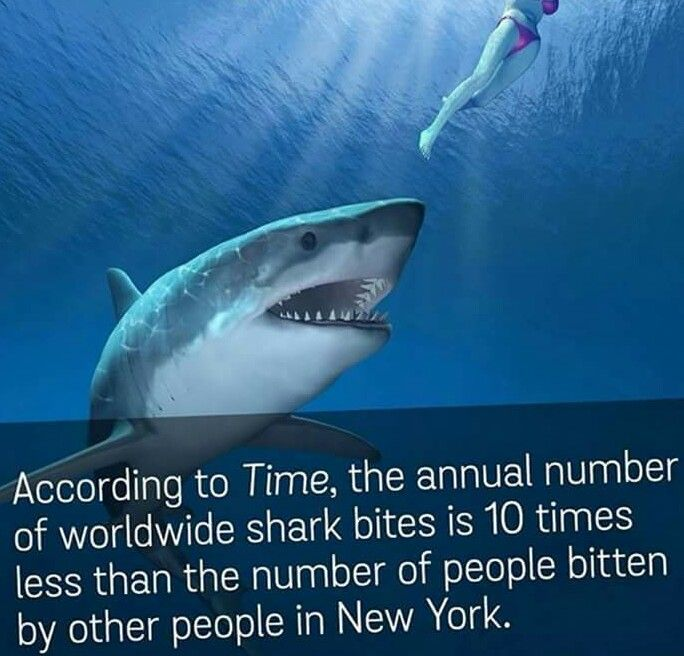Well there's an interesting shark fact!