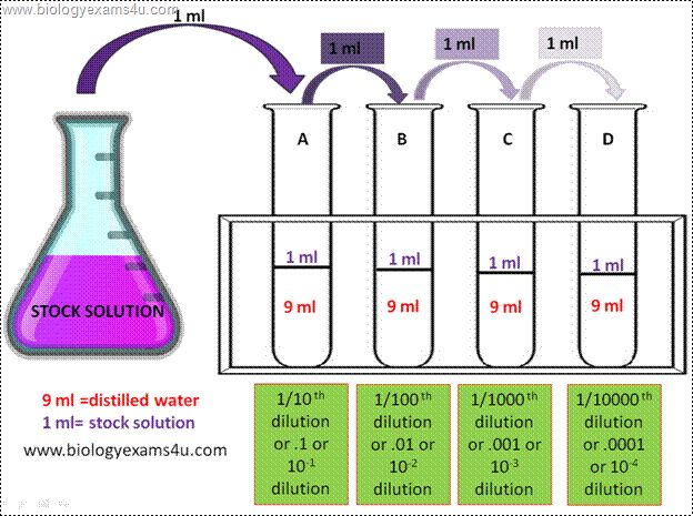 Serial dilution Procedure diagram