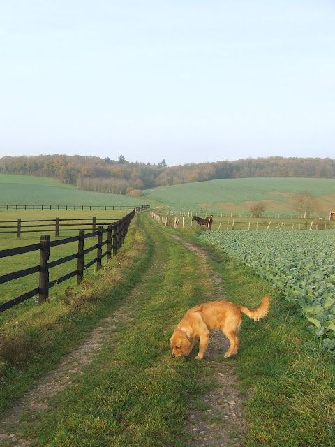 Farm Lane....We had fences on both sides, but our fences were posts and wire. I LOVED to walk down the lane !