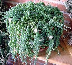 Resultado de imagen para plantas ornamentales con sus nombres lamina