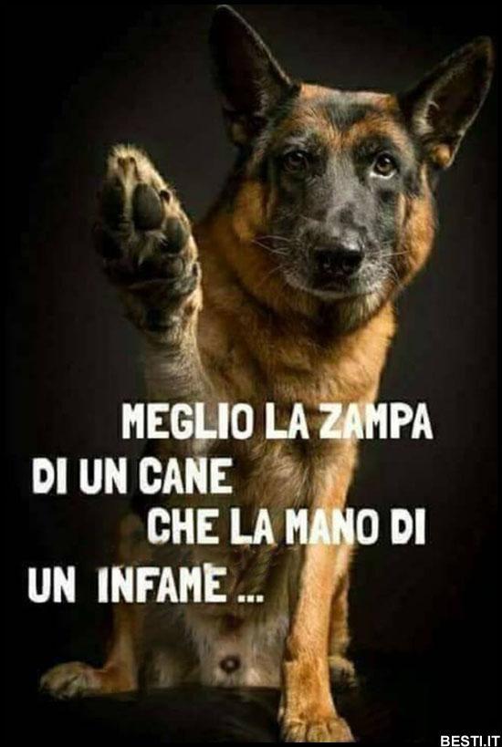Meglio la zampa citazioni citazioni sui cani cuccioli di lupo