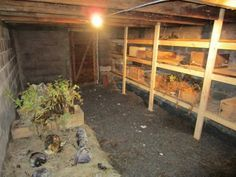 The 8 Fundamentals To Digging A Root Cellar