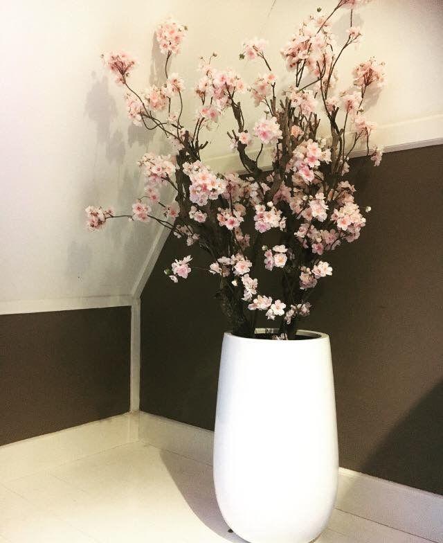 Bloesemboom Favorite http://www.annefleurs-shop.nl/a-46978814/bloesembomen/bloesemboom-favorite-155-hoog-te-bestellen-in-verschillende-kleuren/