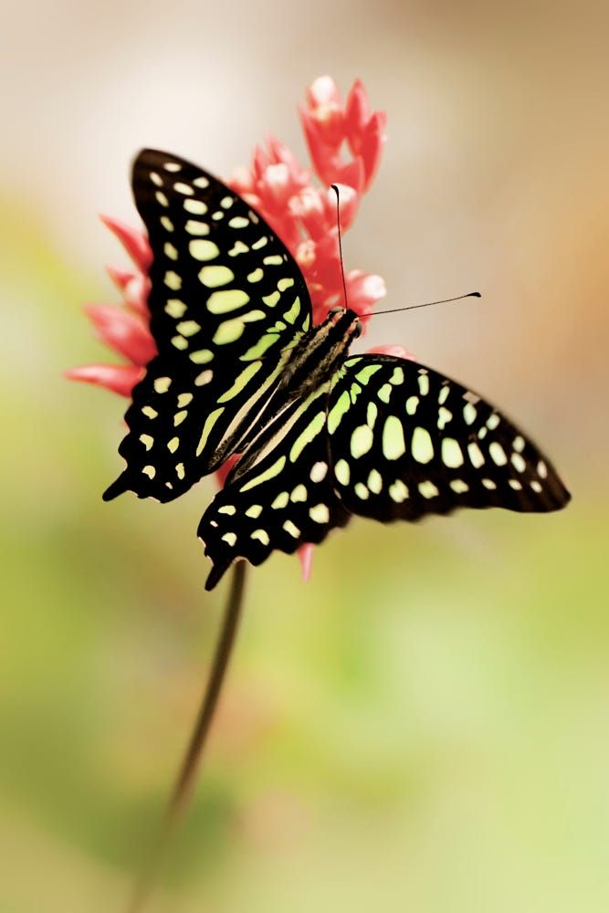 Winged Beauty by John Fotheringham
