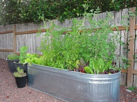 Galvanized livestock watering troughs for raised bed gardening.