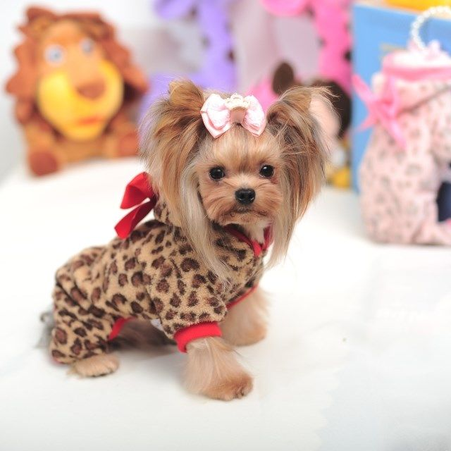 Yorkshire Terrier Accessories Yorkie Clothes Carriers Dog ...