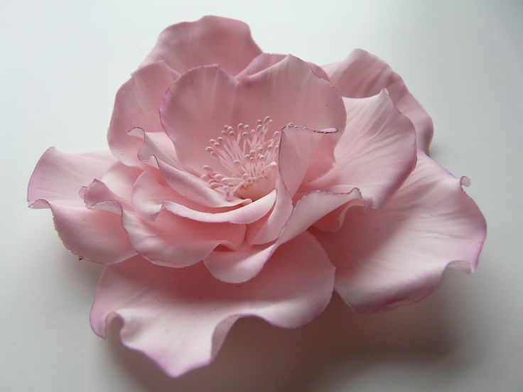 ligiadasantis: easy rose-