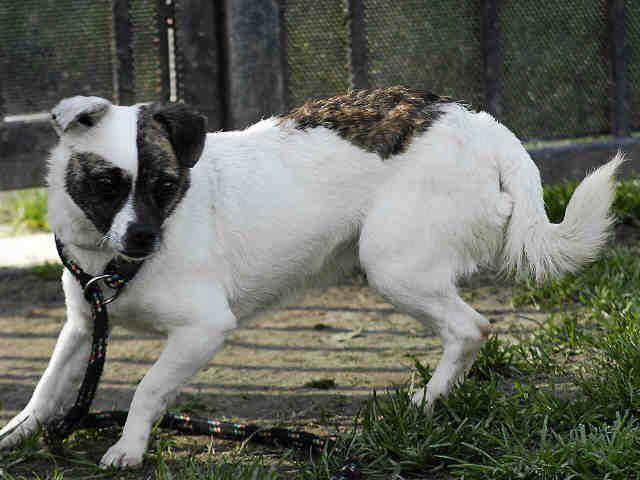 Chihuahua dog for Adoption in Long Beach, CA. ADN-474849 on PuppyFinder.com Gender: Female. Age: Adult