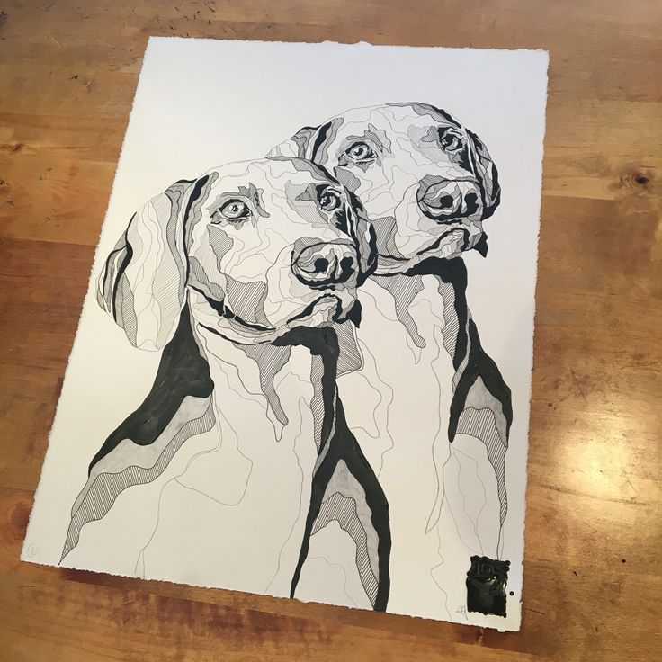 Work by #CharlotteHawleyCreative #Lots #Dogs #Drawing