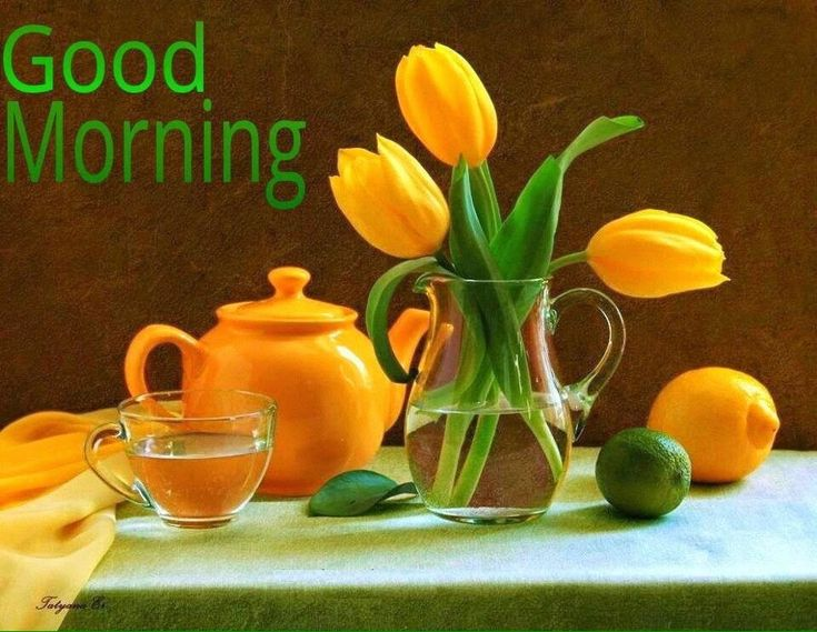 Best Good Morning Images and Messages for whatsapp  Whatsapp Messages Status DP
