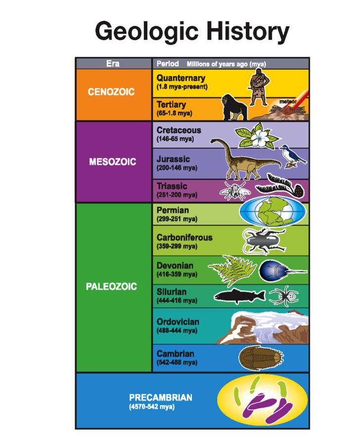 Geologic time scale worksheet biology