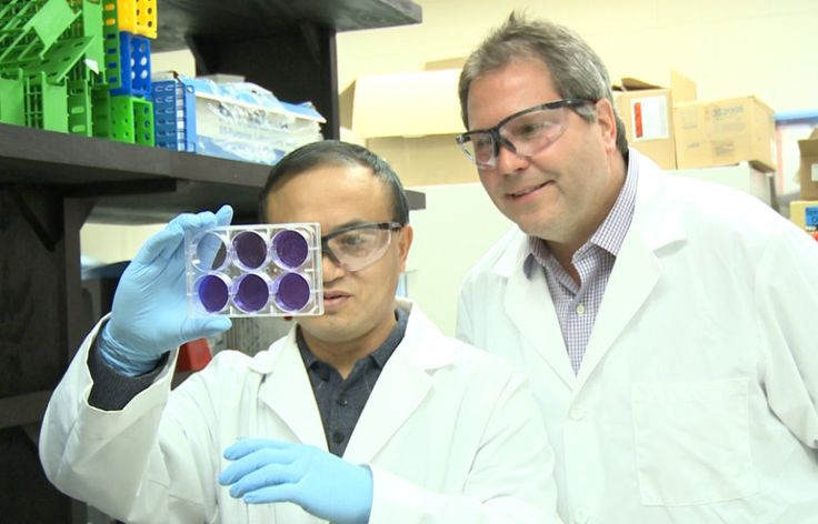 Vaccines developed for H5N1, H7N9 avian influenza strains -- ScienceDaily