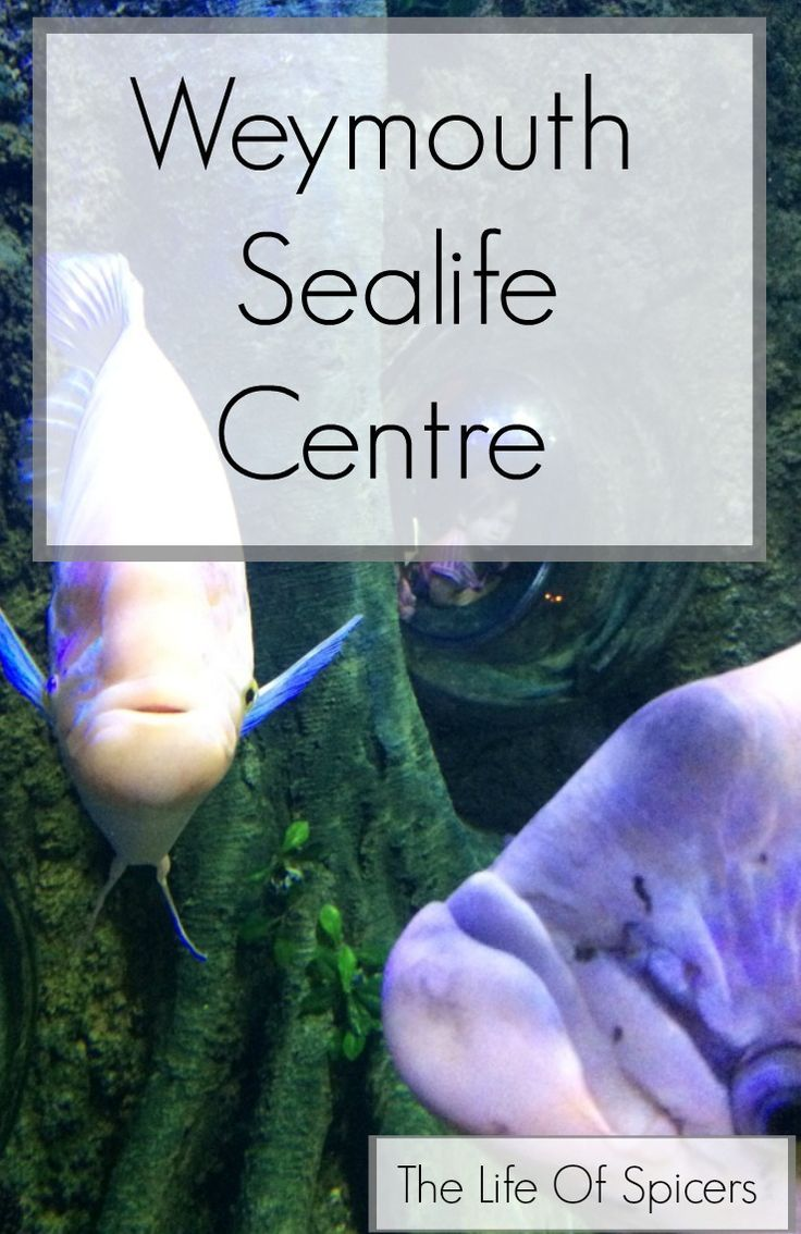 Weymouth Sealife Centre - The Life Of Spicers