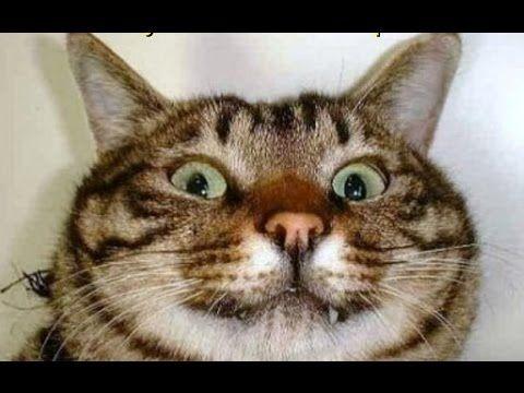 Смешные картинки с летом и кошками