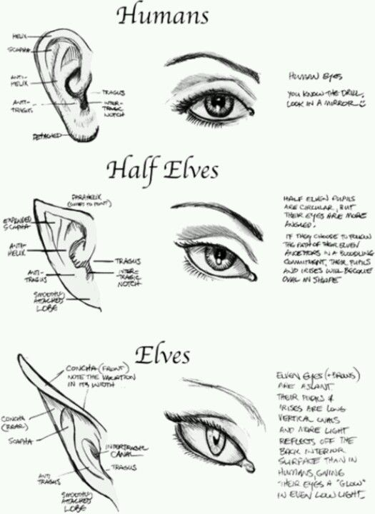 If your wondering about how us elves look compared to you