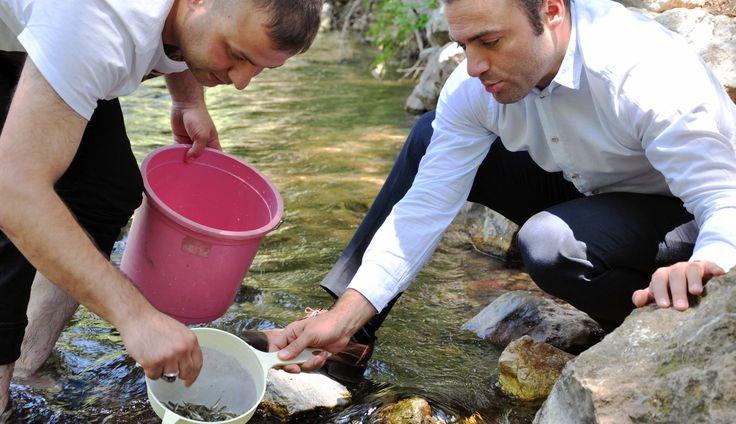 Nergele Çayı'na 7 bin kırmızı benekli alabalık yavrusu bıra - Maraş Olay | Kahramanmaraş Haber Merkezi