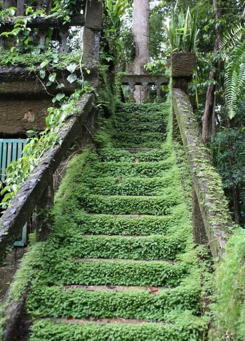 I'd like to find an old building that was partially overgrown with ivy and other plants and large enough to explore