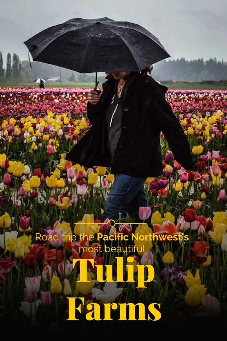 You have to add a trip to the tulip farms of the Pacific Northwest to your bucket list. Read one of our featured travelers' #extraordinaryjourneys and plan your own trip.