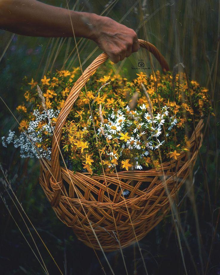 Фотошторы цветы зелень является отцом