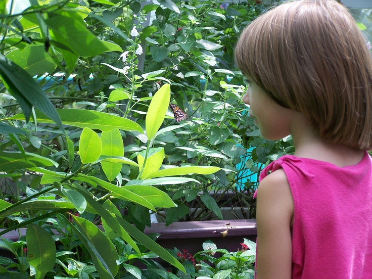 Genial Younger MOSI Guests Love Seeing The Colorful Creatures In The Bioworks Butterfly  Garden.