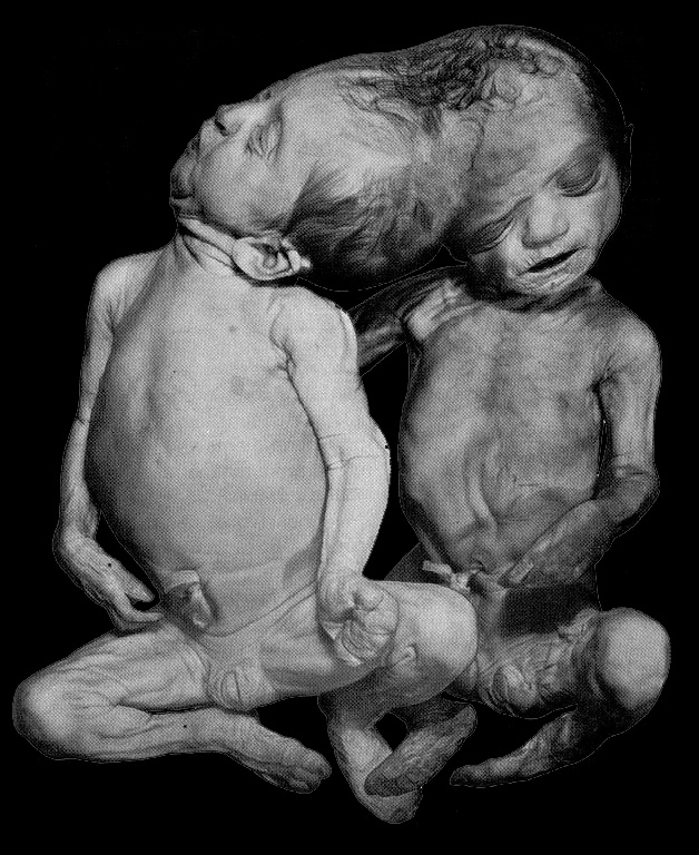 Giving his mistress cunnilingus