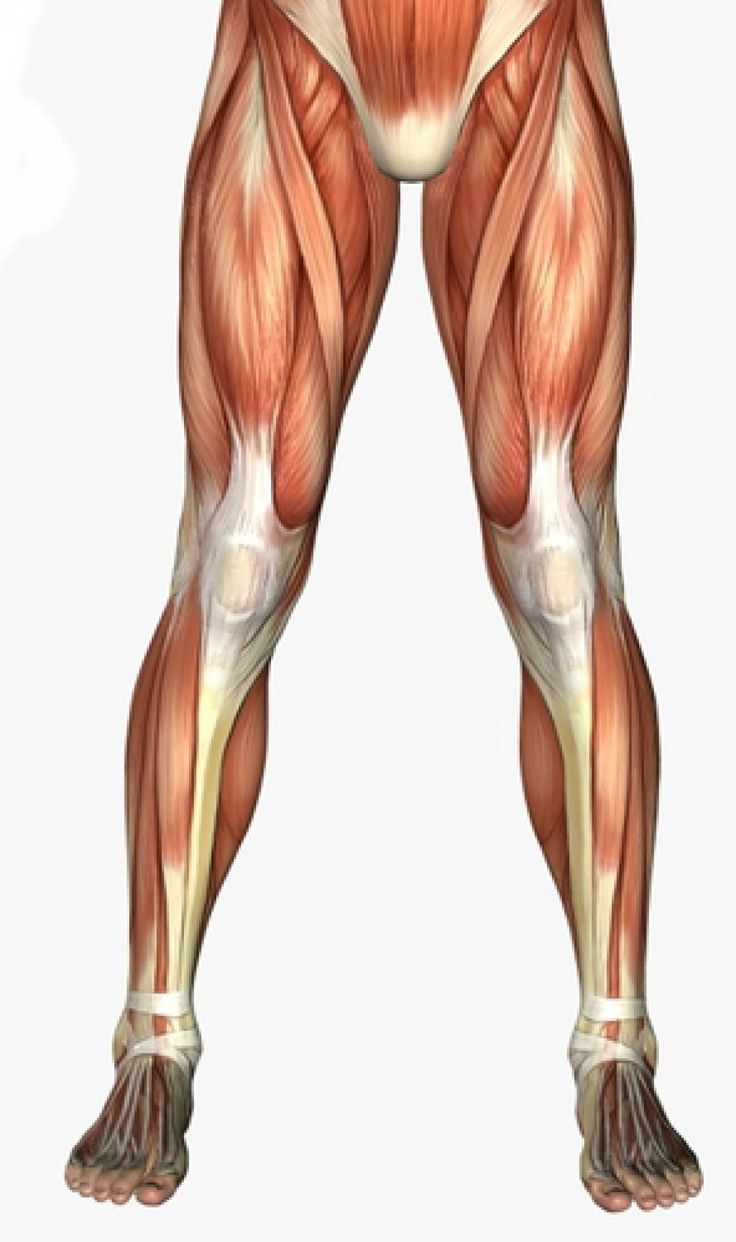 Amazing Mcl Anatomy Of Knee Crest - Anatomy Ideas - yunoki.info