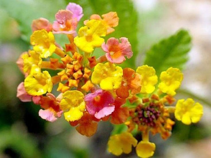 ¿Qué podemos plantar en zonas muy soleadas?