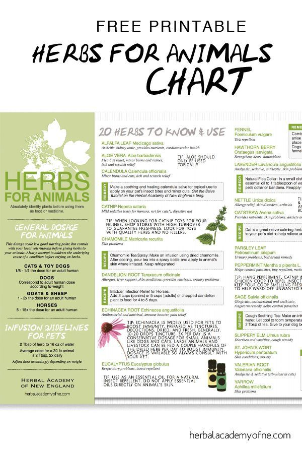 Natural remedies and tips for using Herbs for Animals ...