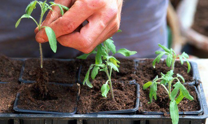 Que Faire Au Potager En Avril Potager Planter Tomates Et