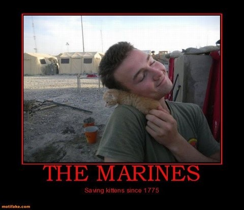the marines have been saving kittens since