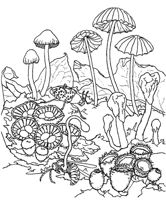 mushroom Adult Colouring Mushrooms