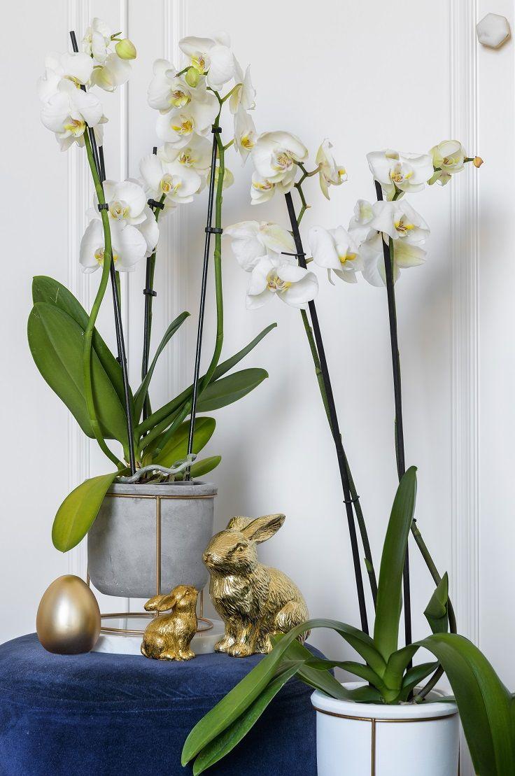 Oryginalny Kwietnik Plants