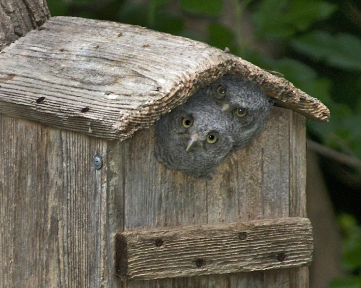 70 Best Images About Bird Houses Feeders On Pinterest