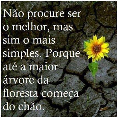 Sê quem tu és!  http://www.patricvieira.com/desfrutaavida&ad=pt-flor-chao
