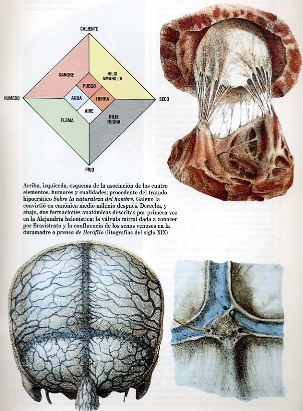 187 best Medicine, history of the brain and memory images on ...