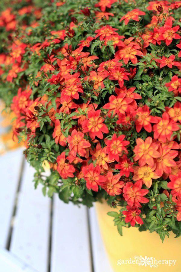 1878 Best Hometalk Flowers Images On Pinterest Flower