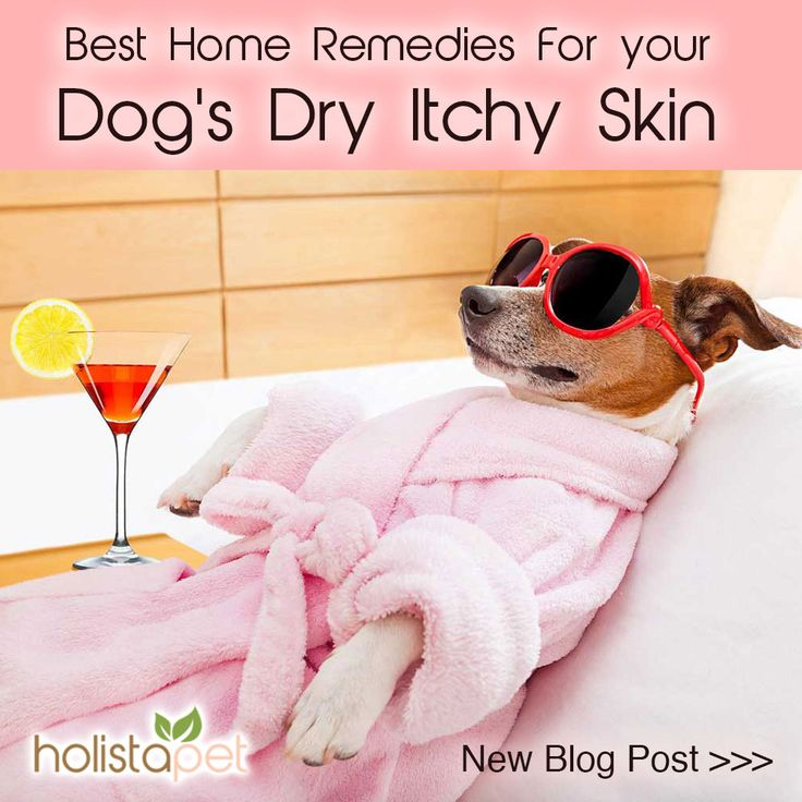Is your dog itching and scratching all day and driving you nuts?? These natural home remedies will suppress the itch and help get your dog back on track. Find the cause and implement the solution! Read the full article! . . .  .  .  .   #dogdryskin #Scratchydog #dogallergies #holistidogs  #holisticpets  #cbdfordogs  #holistapet  #dogtreats  #cbddogtreats  #doggytreats  #cannadog  #pettreats  #healthydogtreats  #organicdogtreats  #naturaldogtreats