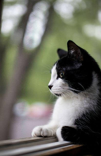 Black & White Cat ....